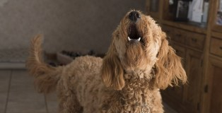 How to train your dog to stop barking all the time?