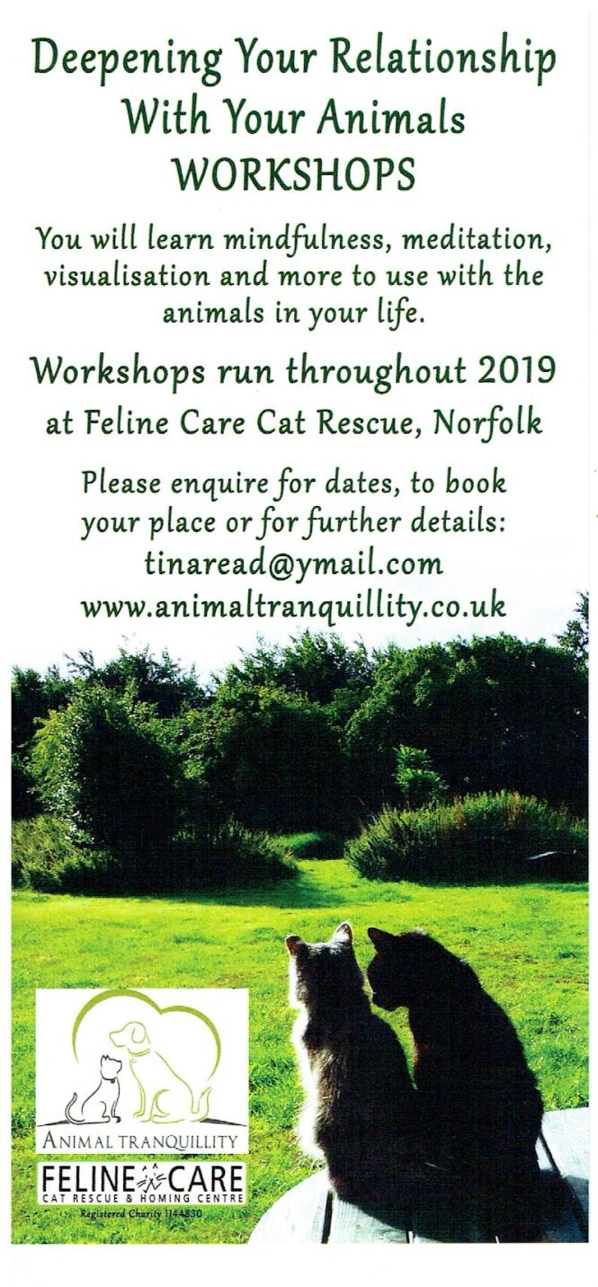 Mindfulness with your Animals flyer