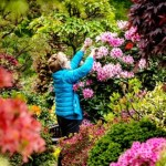 The UK is still a nation of traditionalists when it comes to pastimes – with reading, walking, eating out and gardening among the most popular hobbies