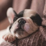 6 Basic Puppy Needs for a Happy, Healthy Start in Life