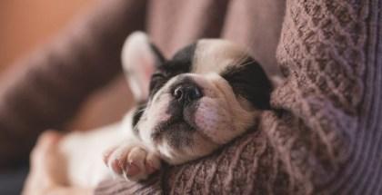6 Basic Puppy Needs