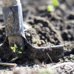 Summer In The South: 3 Tips On How To Prepare Your Sussex Garden For Summer