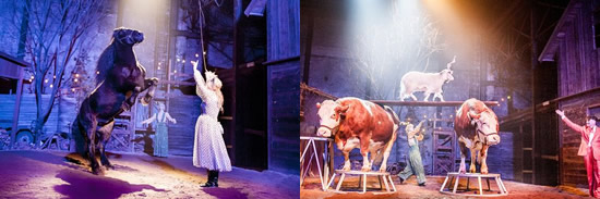 Incredible shots of some of the animal cast of 'Hjälp sökes' - Photos: Magnus Hjalmarsson Neiderman