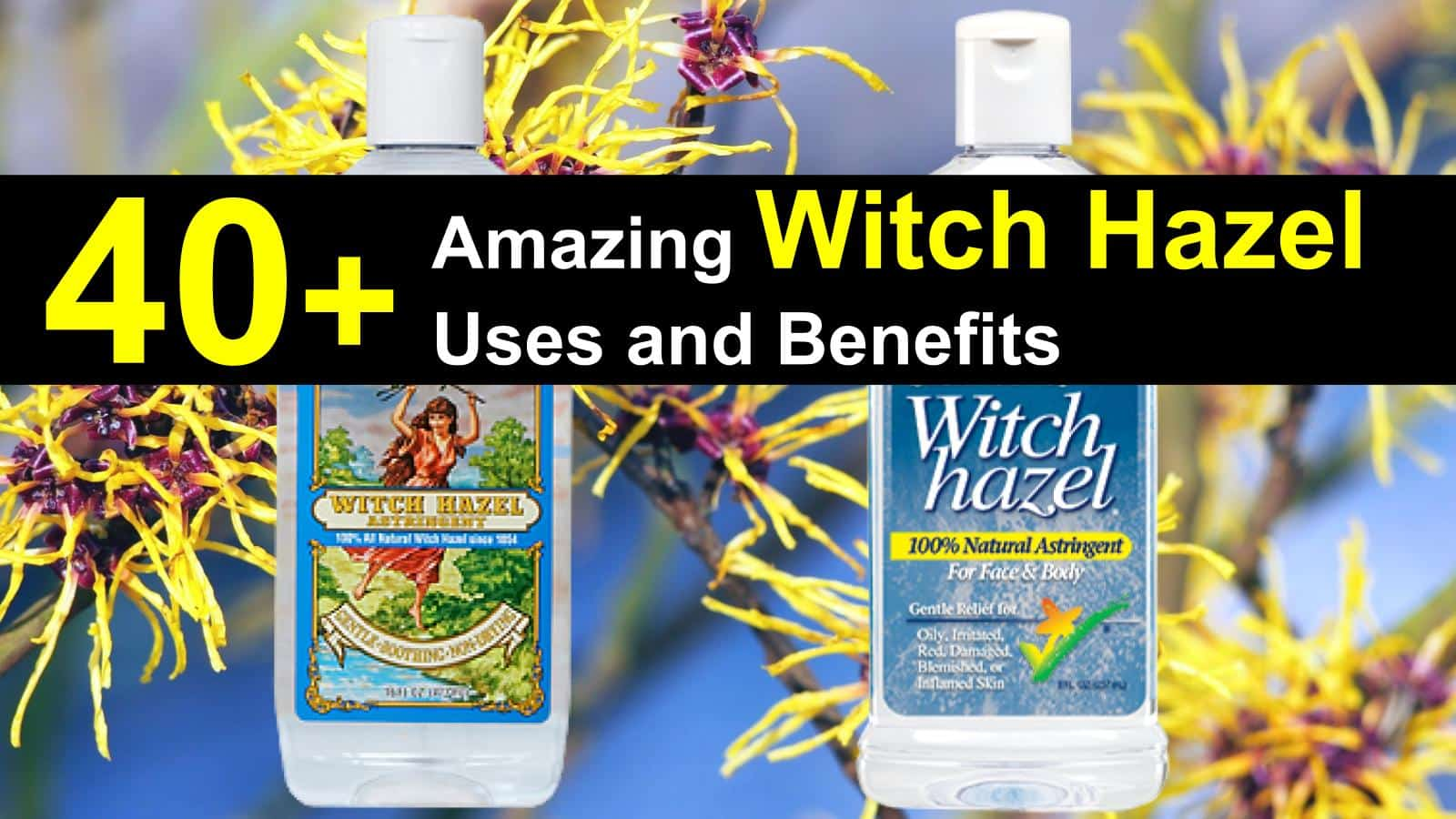 witch-hazel-uses-titlimg-3