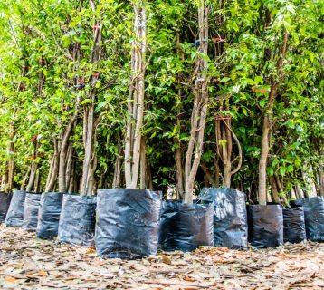 india-plants-fifty-million-trees-1024x637