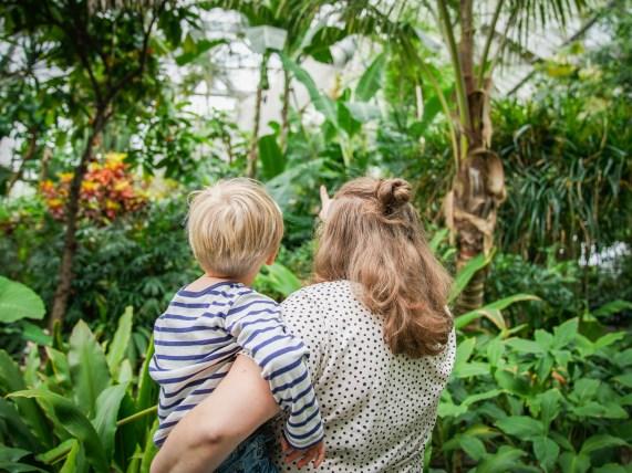 Ausflugstipp in Hamburg: Gewächshäuser im Botanischen Garten vom Planten un Blomen ist ein super Auslfug mit Kindern in Hamburg.| ichsowirso.de