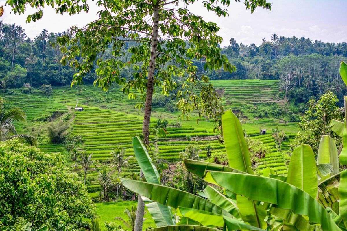 Bali rizières Ubud