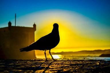 Essaouira blog voyage une semaine