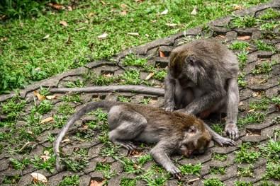 Ubud Que faire à ubud monkey sacred forest forêt sacrée des singes indonésie bali blogvoyage blog voyage