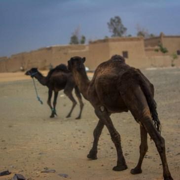 Mergouza Maroc Sahara desertsahara voyage blog blogvoyage desert icietlabas (67)