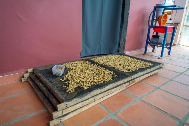 Cafetera Saleto Colombie Blog Voyage