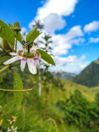 Vallée de la Cocora Salento Colombie Blog Voyage-51