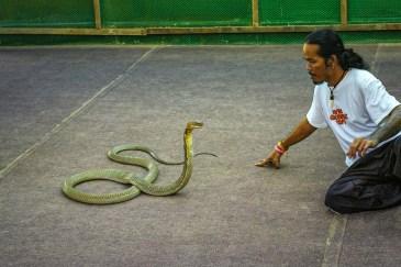 Ferme à Reptiles Koh Samui Thaïlande Blog Voyage-20