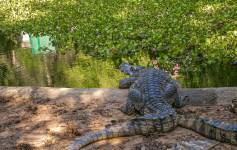 Ferme à Reptiles Koh Samui Thaïlande Blog Voyage