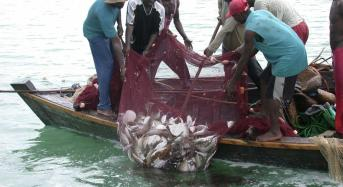 FISH FOR CASH: How the EU robs Africa of its seafood