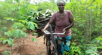 INVESTIGATION: How rural women are feeding the nation despite unfriendly land tenure, scarcity of labour — and the herdsmen problem