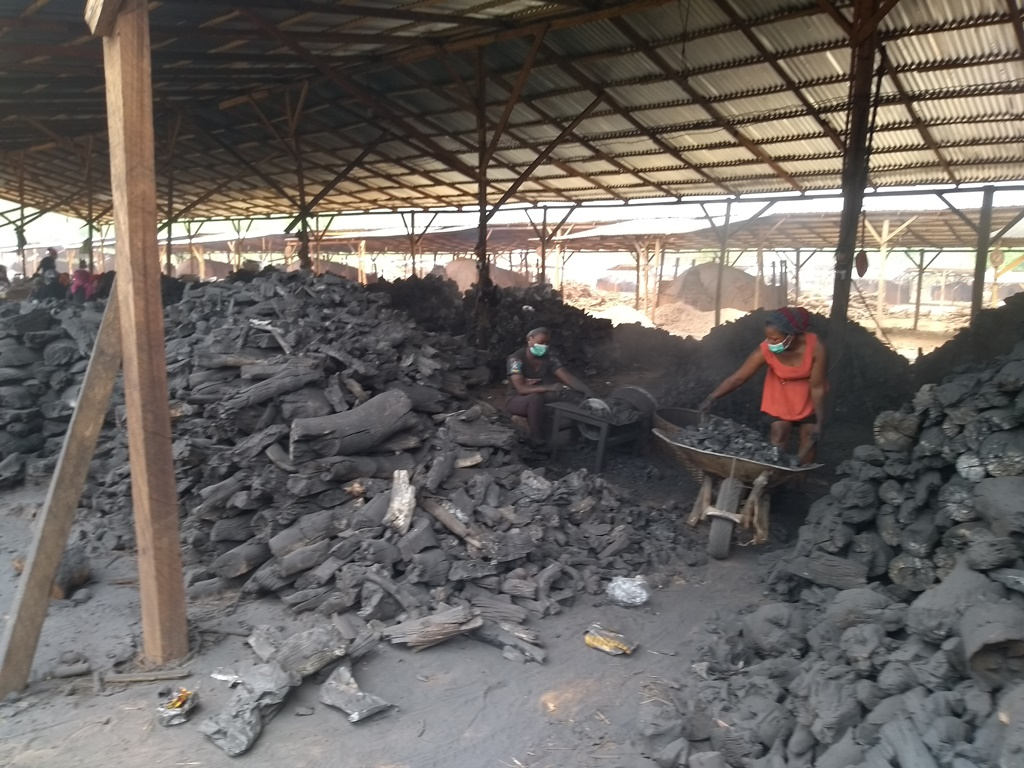 INVESTIGATION: Unlicensed Chinese company overruns forests for wood charcoal in Enugu State