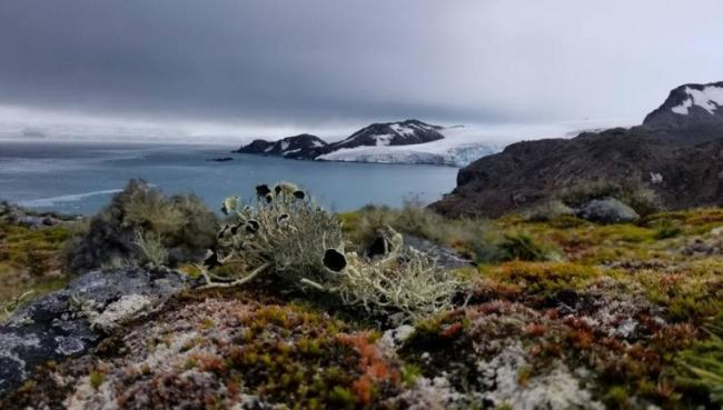 Species from warmer regions could migrate to Antarctica due to climate change / Claudia Colesi