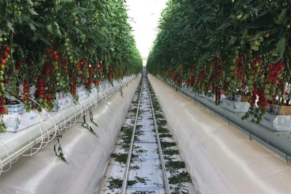 Pure Harvest Smart Farms secures US million in growth funding