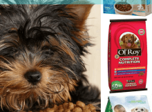 Top 10 Dry Dog Food Brands To Avoid