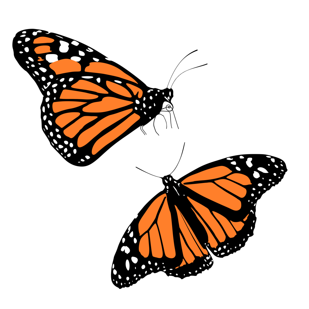 medium resolution of monarch butterflies icons png free png and icons downloads cute butterfly clip art purple butterfly clip art