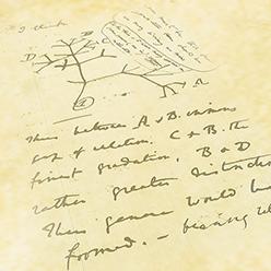 Darwin's Anti-Design Doctrine
