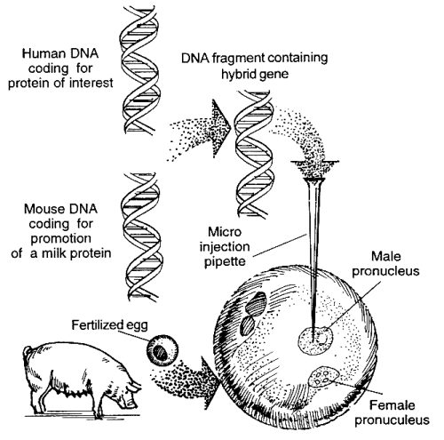 genetic engineering process diagram