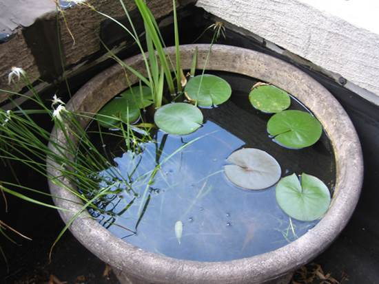 How To Diy Mini Garden Pond In A Container