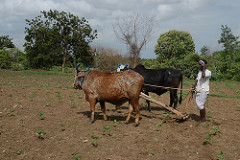 A dryland farmer preparing his land