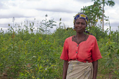 A mid-season drought destroyed the maize crop, but her own pigeonpea flourished, rescuing this farmer's livelihood in Malawi