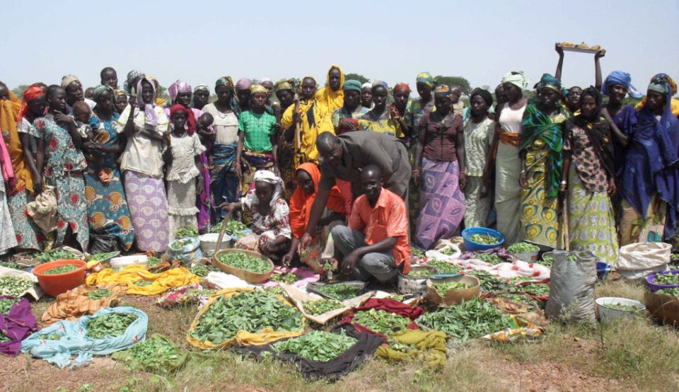 women-participants-with-their-harvest-from-crops-grown-on-reclaimed-land Photo: S Abdoussalam, ICRISAT