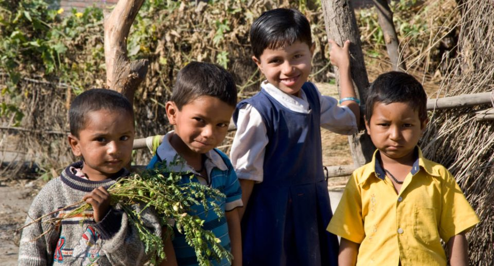 Pulses are the main source of protein to mitigate malnutrition in children