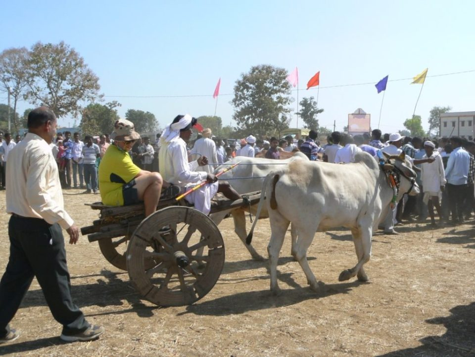 Smooth ride on a bullock cart