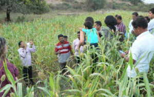 With farmers in a sorghum field.