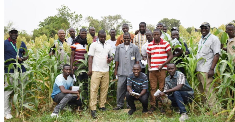 """Young agricultural technicians of MyAgro visit """"Soubatimi"""", multipurpose sweet sorghum variety seed production plot in off season. Photo: A Diama, ICRISAT"""