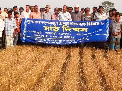A Field Day organized at an ICCV 92944 field in Bangladesh. Photo: PRC, Ishurdi, Bangladesh