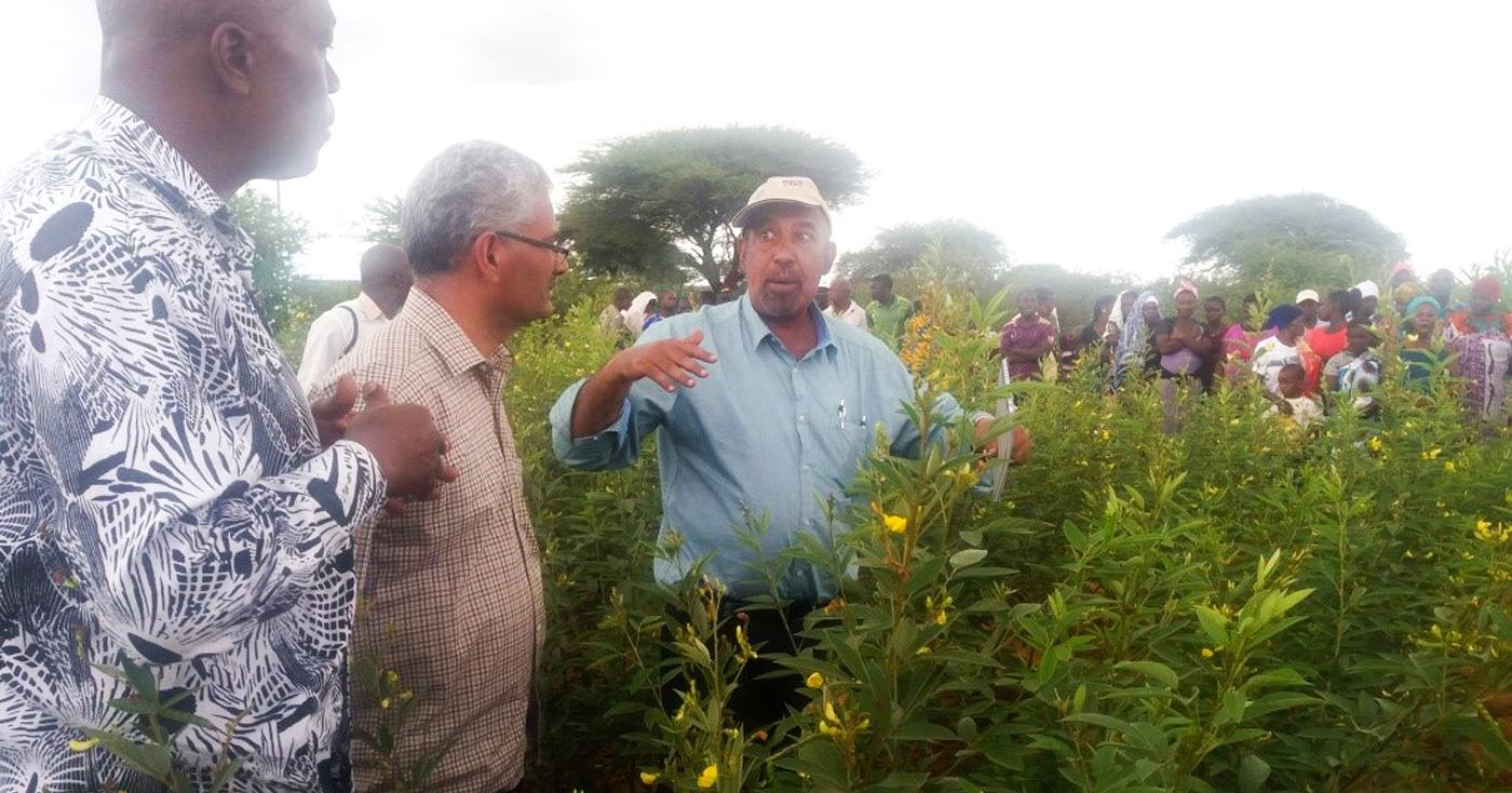 Dr Said Slim sharing pigeonpea production skills. Photo: Wills Munthali