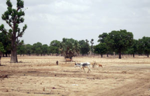 Dry landscape in Sibougou, central Mali. Photo: Zoe Tabary, Thomson Reuters Foundation
