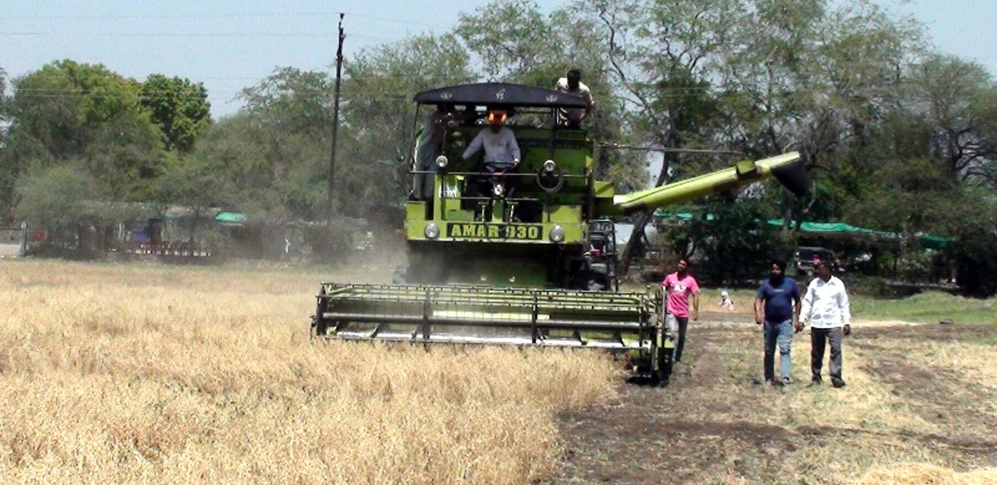 Demonstration on machine harvesting of chickpea variety Phule Vikram at a farmer's field in Maharashtra. Photo: MPKV