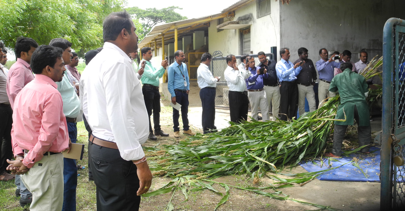 Participants are exposed to silage making process. Photo: D Ravi, ILRI