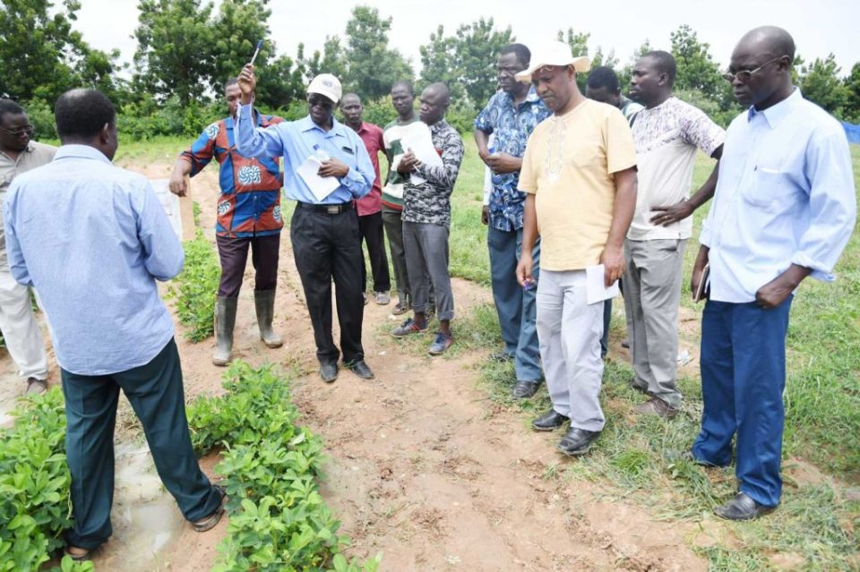 Visit to TL III groundnut trials at Gampela, Burkina Faso. Among the visitors were Dr Ramadjita Tabo, Regional and Research Program Director, ICRISAT West and Central Africa; Dr. Clarisse Barro, sorghum breeder; Dr. Roger Zangre, Pearl millet breeder and HOPE II National Coordinator; Dr. Korodjouma Ouattara; Dr. Amos Miningou, groundnut breeder and TL III National Coordinator; Dr. Chris Ojiewo, TL III Project Coordinator; Dr. Hamado Tapsoba, Hope II Project Coordinator.