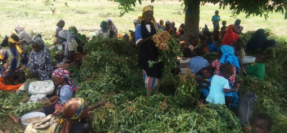 Women and children involved in farm activities in the groundnut chain. Photo: ICRISAT