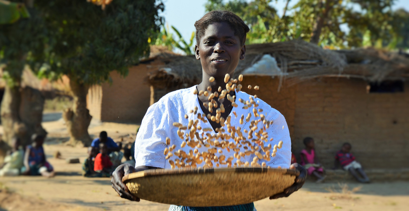 A woman in Malawi tosses groundnuts. Photo: Alina Paul-Bossuet, ICRISAT