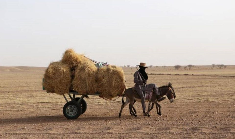 A farmer rides a donkey cart with hay on the back outside Agadez, Niger.