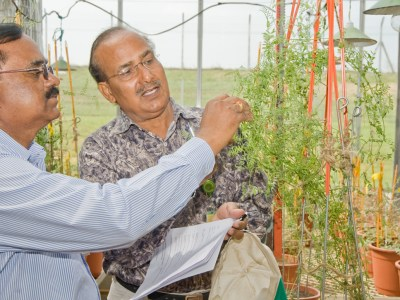 Dr Hari D Upadhyaya, ICRISAT, Head, Genebank, and Principal Scientist, has received the global Legacy Awards given by the Crop Trust for his lifetime work on preservation of crop diversity. Photo: ICRISAT