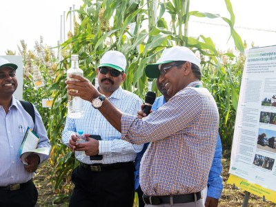 Participants at the sorghum fields to demonstrate the progress made by ICRISAT in developing feedstock for 1G and 2G biofuel production. Photo: ICRISAT