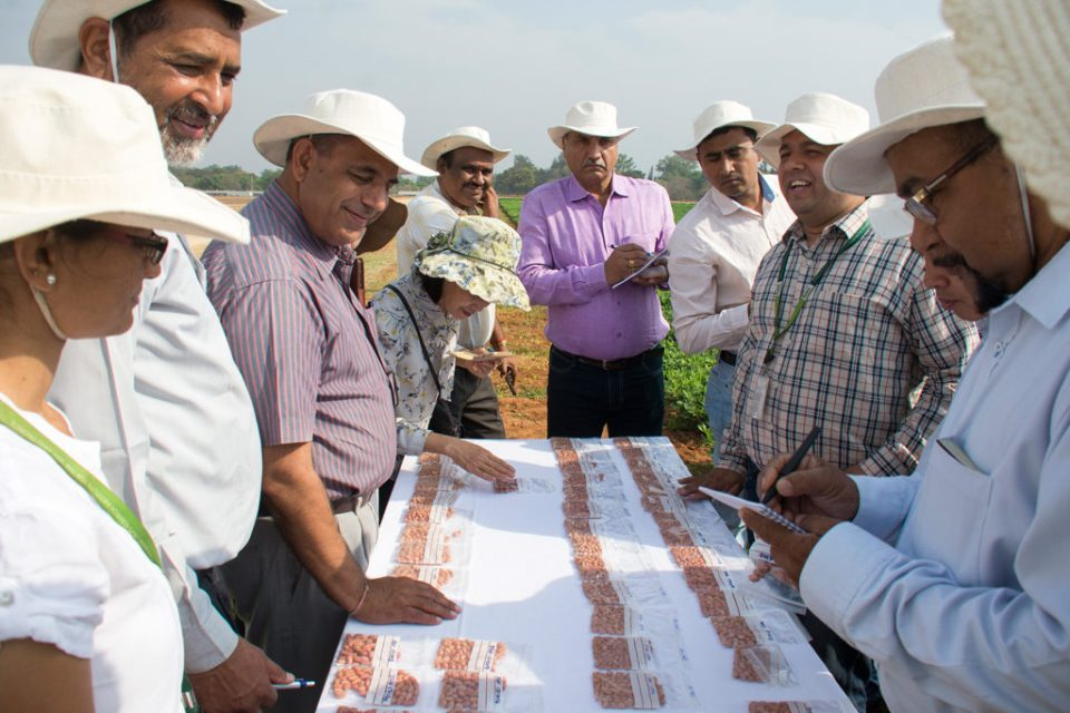 Groundnut Network Group-Asia participants selecting high oleic lines based on kernel shape and size. Photo: ICRISAT
