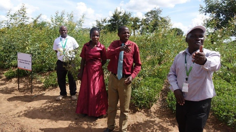 ICRISAT scientists and farmers explaining the participatory selection process and benefits in better pigeonpea varieties for intercropping.