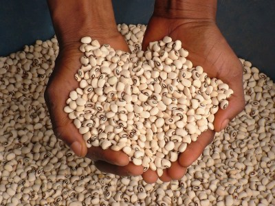 Out of 137 publications analyzed using an institutional analysis framework, 55.5% make specific reference to the institutional dimension of climate-smart agriculture. Photo: IITA