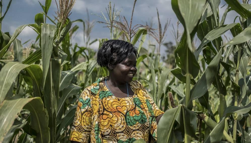 A farmer in her maize plot in Bidi Bidi refugee camp Copyright: Panos